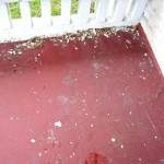 paint chips on fha appraisal
